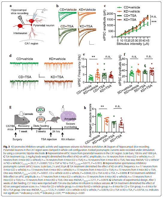 The ketogenic diet increases Neuregulin 1 expression via elevating histone acetylation and its anti-seizure effect requires ErbB4 kinase activity -