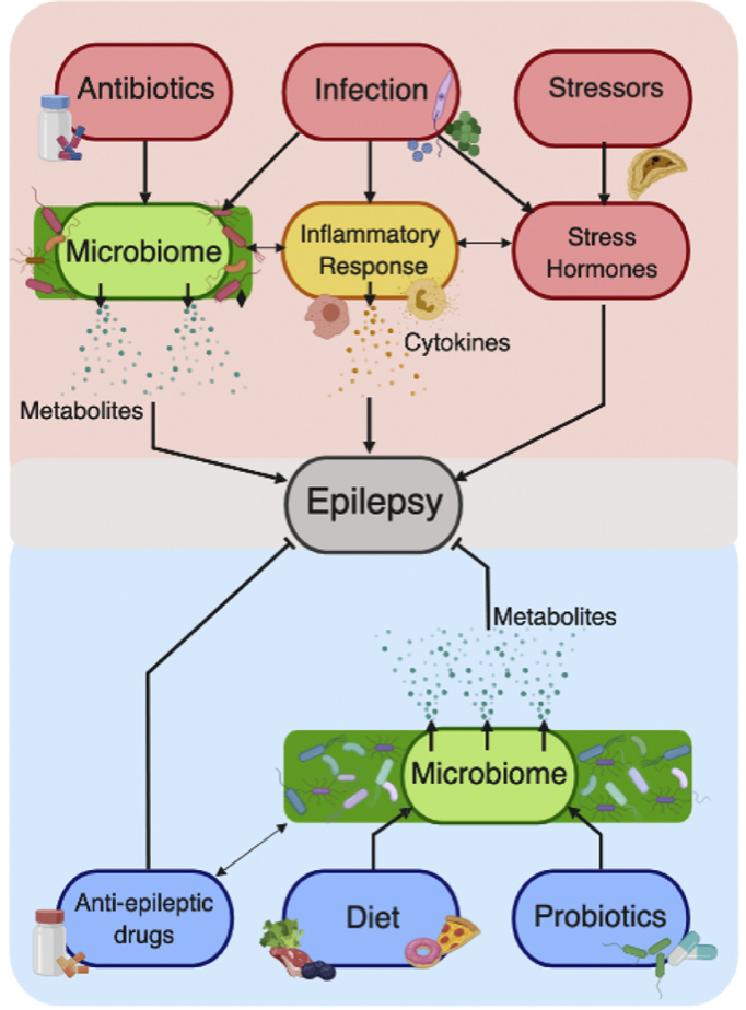 Emerging roles for the intestinal microbiome in Epilepsy -