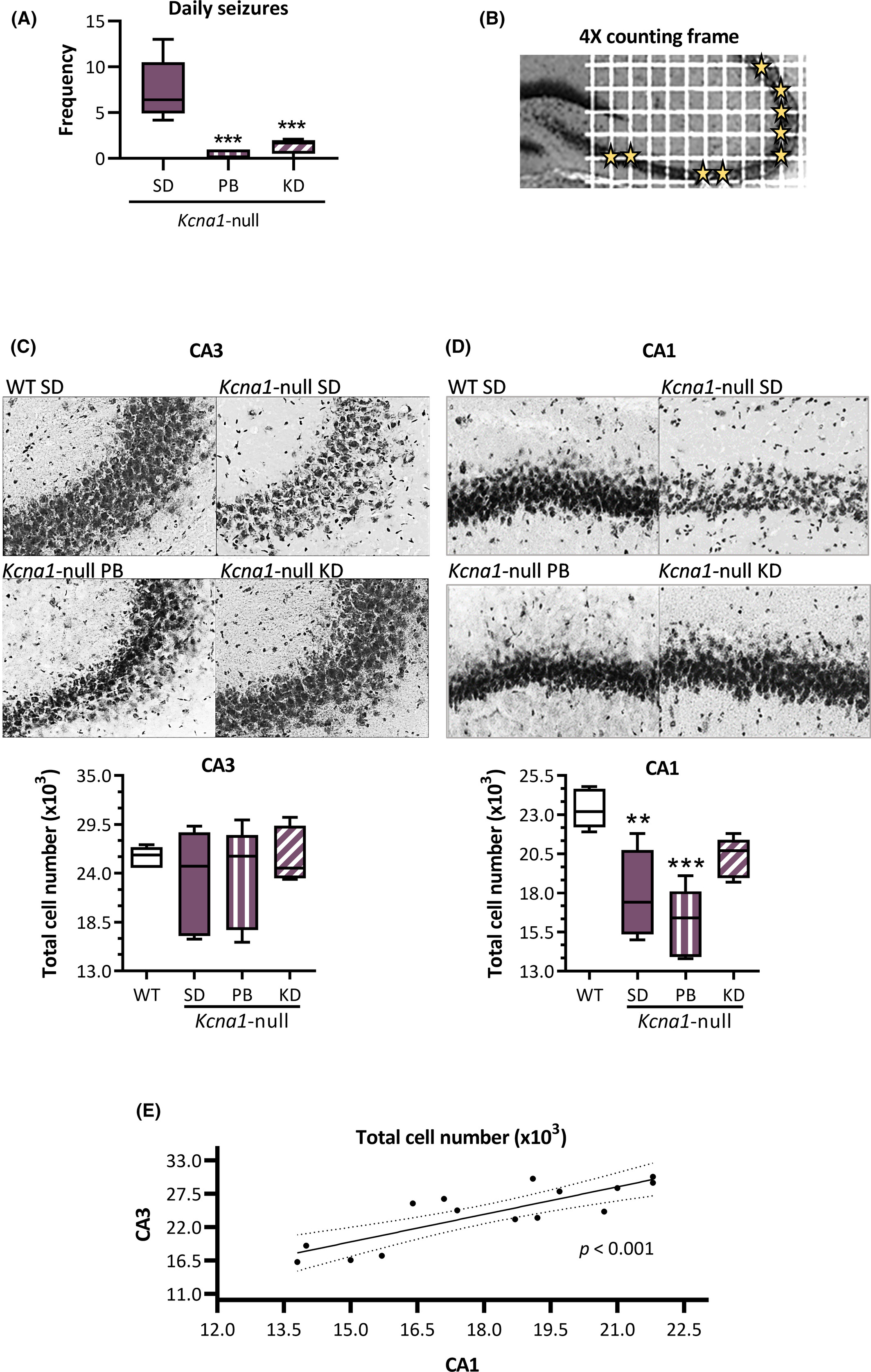 Ketogenic diet-mediated seizure reduction preserves CA1 cell numbers in epileptic Kcna1-null mice: An unbiased stereological assessment -