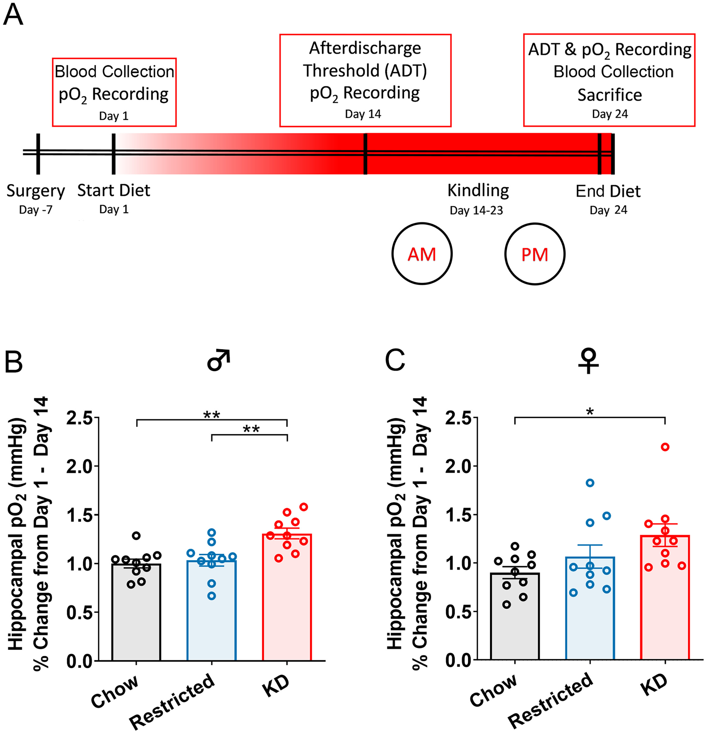 The ketogenic diet raises brain oxygen levels, attenuates postictal hypoxia, and protects against learning impairments -