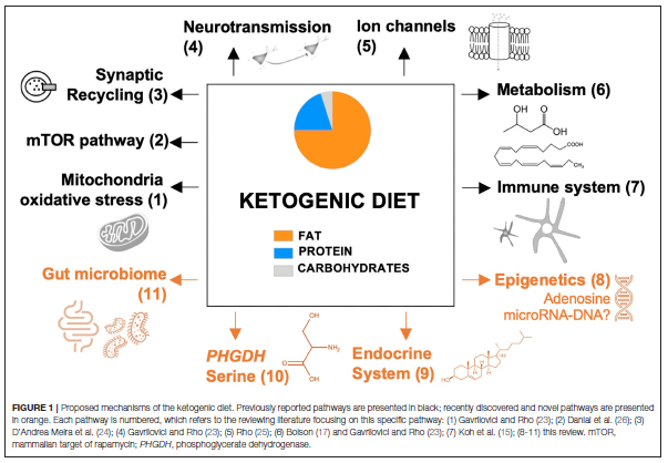 The Ketogenic Diet Revisited: Beyond Ketones -
